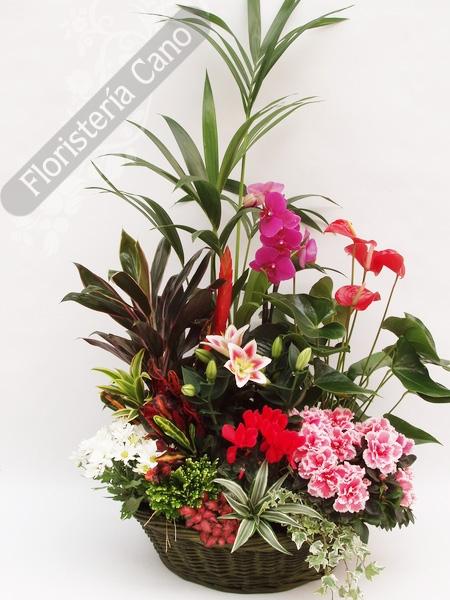 Cesta de plantas de interior comprar en florister a online de venta por internet - Plantas de interior online ...